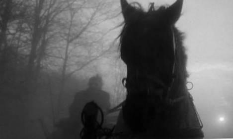 The Turin horse - horse